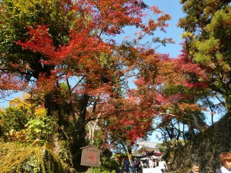 犬山城 紅葉2.jpg