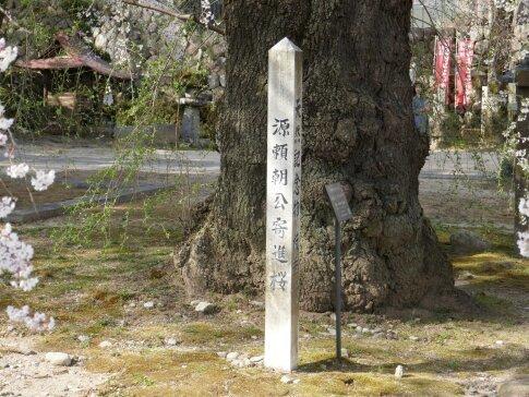 瑠璃寺の枝垂れ桜4.jpg
