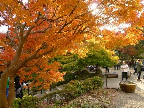 白野江植物公園 紅葉2.jpg