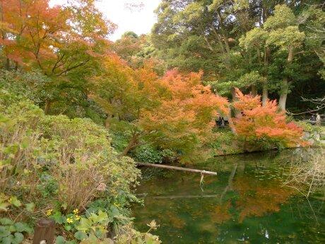 白野江植物公園 紅葉3.jpg