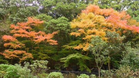白野江植物公園 紅葉5.jpg