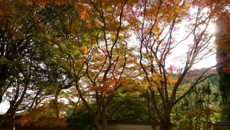 白野江植物公園 紅葉1.jpg