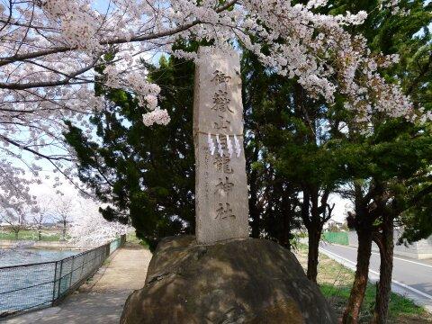 白龍神社の桜.jpg