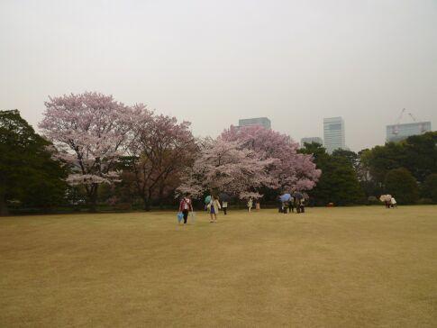 皇居東御苑の桜.jpg