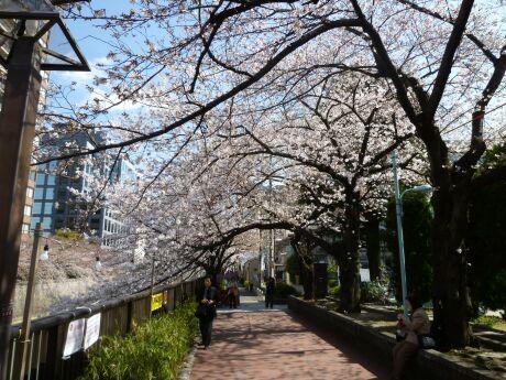 目黒川沿いの桜.jpg