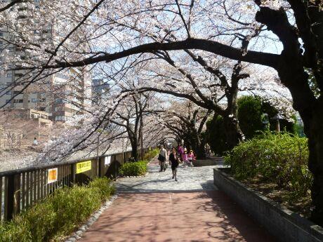 目黒川沿いの桜2.jpg