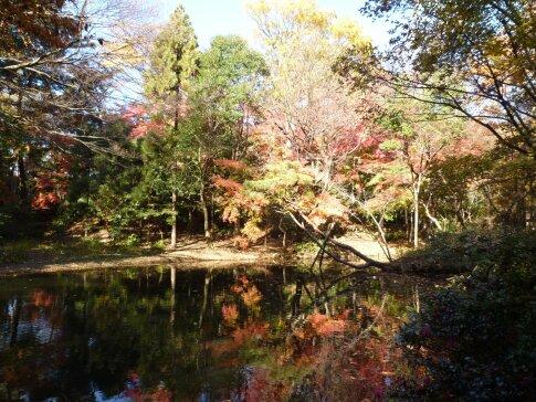 石神井記念庭園の紅葉.jpg