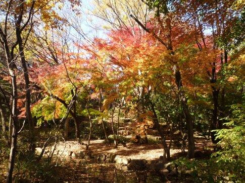 石神井記念庭園の紅葉4.jpg