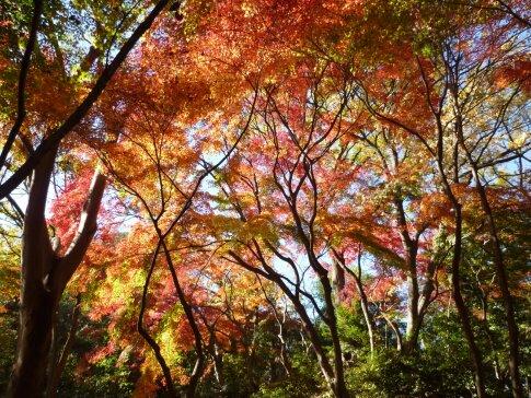 石神井記念庭園の紅葉5.jpg