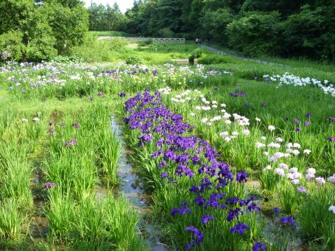 神代水生植物園3.jpg