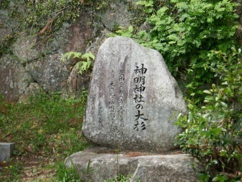 神明神社の大杉.jpg