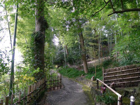 竹採公園2.jpg