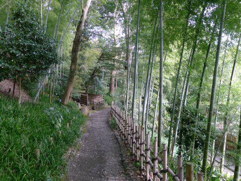 竹採公園3.jpg