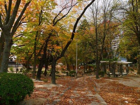 紅葉山公園.jpg