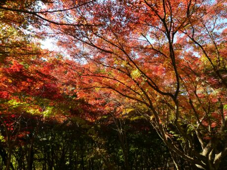 織姫公園 もみじ谷2.jpg