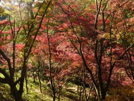 織姫公園 もみじ谷3.jpg