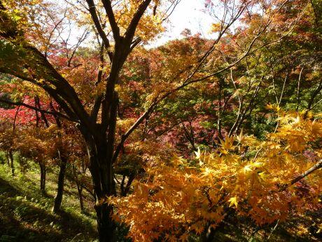 織姫公園 もみじ谷4.jpg