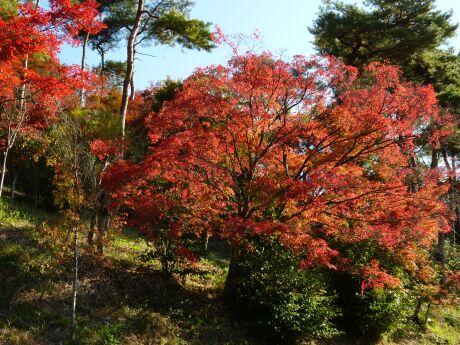 織姫公園 もみじ谷5.jpg