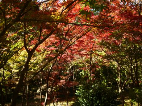織姫公園 もみじ谷6.jpg