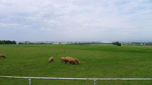 羊ヶ丘展望台2.jpg