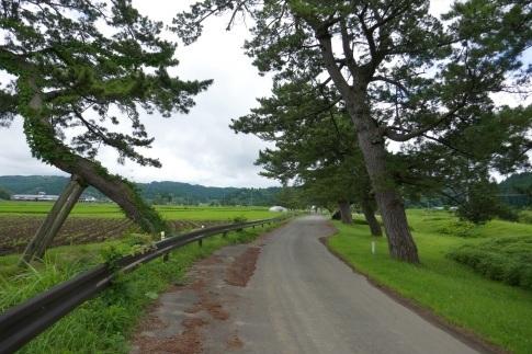 羽州街道松並木3.jpg
