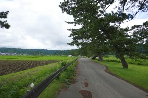 羽州街道松並木5.jpg