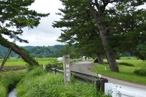 羽州街道松並木6.jpg