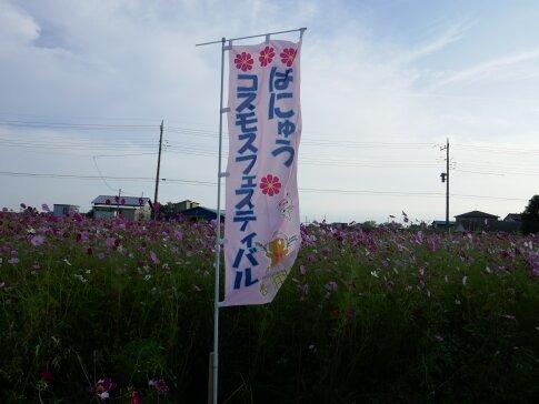羽生コスモスフェスティバル.jpg
