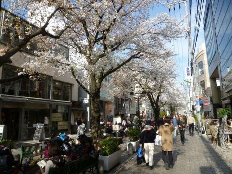 自由が丘の桜2.jpg