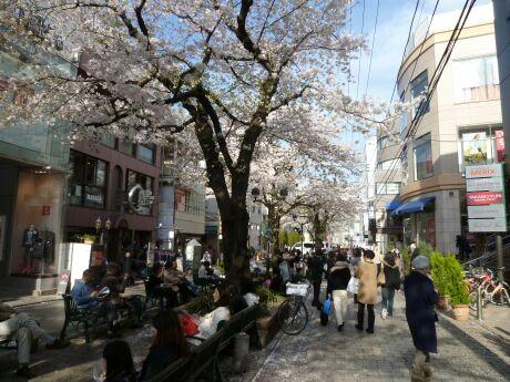 自由が丘の桜3.jpg