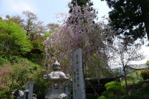 荒砥城趾 桜2.jpg