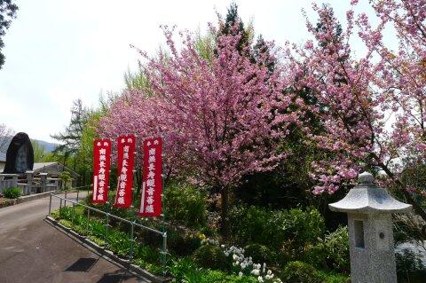 荒砥城趾 桜3.jpg