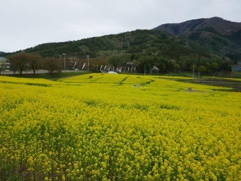 菜の花公園3.jpg
