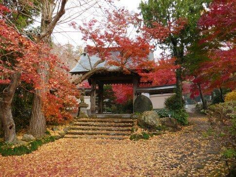 薬王寺の紅葉2.jpg