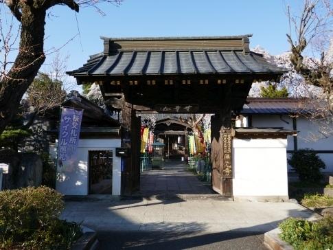 西光寺の桜.jpg