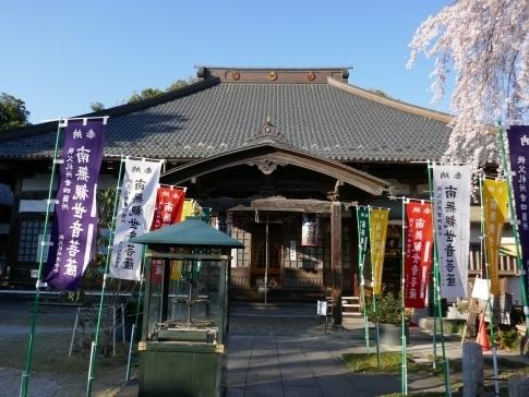 西光寺の桜3.jpg