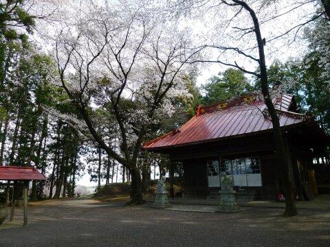 西野神社の桜4.jpg
