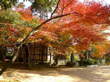 覚苑寺の紅葉3.jpg