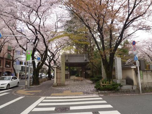 観音禅院の桜3.jpg