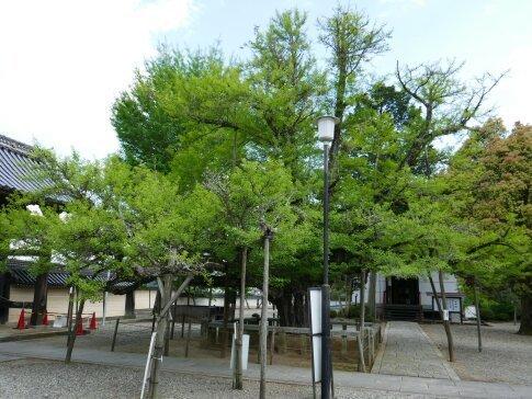 誕生寺2.jpg