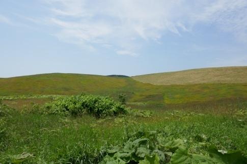 豊富の大牧草地2.jpg