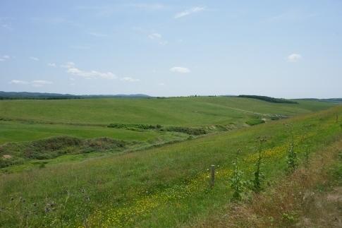 豊富の大牧草地7.jpg
