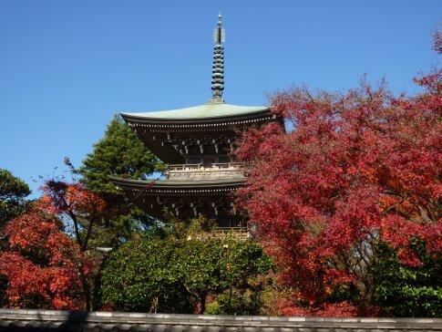 道場寺の紅葉2.jpg