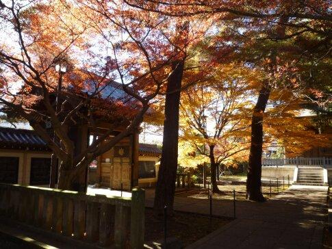 道場寺の紅葉3.jpg