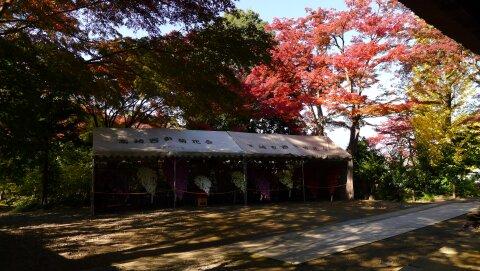 達磨寺 紅葉201304.jpg