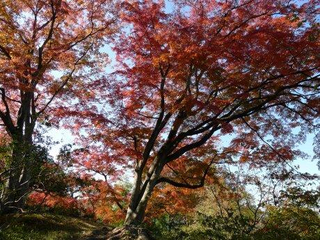 達磨寺 紅葉201306.jpg
