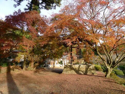 金蔵院 佐野 紅葉3.jpg