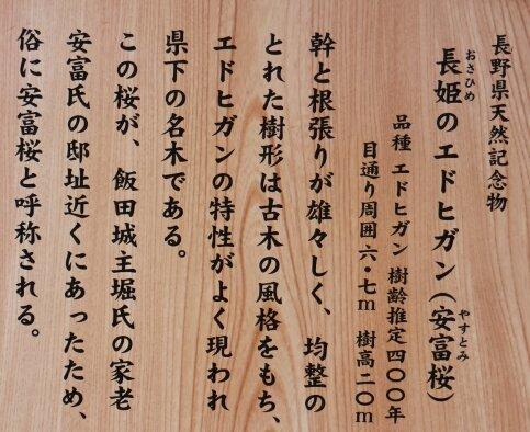 長姫のエドヒガン4.jpg