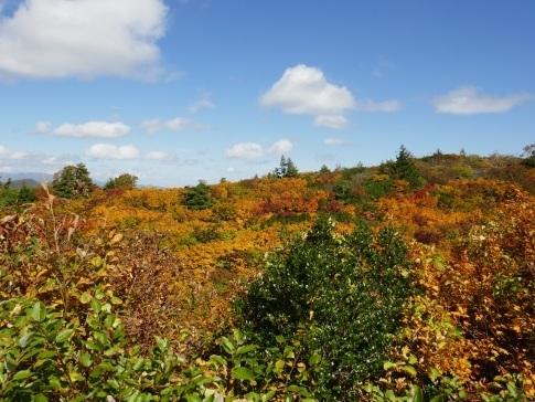 須川高原の紅葉3.jpg