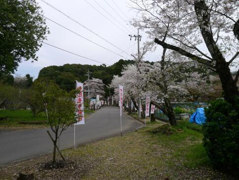 願成寺の桜2.jpg